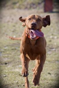 DogWebShop Kutyapanzió - Roni
