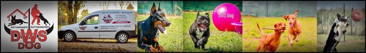 DWS DOG – Kutyapanzió – Kutyakiképzés – Kutyás webáruház